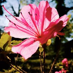 alabama flowers upcloseandpersonal