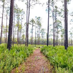 freetoedit hike hiking woods outdoor pcintonature pcforest
