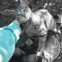 freetoedit cat eccolorsplasheffect colorsplasheffect