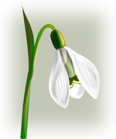 ftestickers flower snowdrop luminous glowing freetoedit