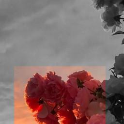 wallpaper flower flowers aestetic freetoedit