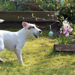 easter photography dog spring mydog