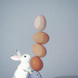 freetoedit easter comiceffect rabbit eggs