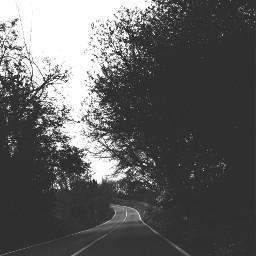 road trees leavs spring myoriginalphoto