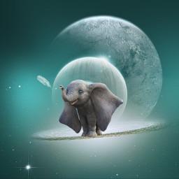 freetoedit dumbo feather moonlight