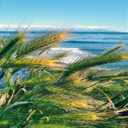 beachview tallgrass pcintonature intonature