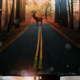 freetoedit photoedition editionbyme umberella deer