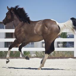 pchorses myphotography lamadedis horse horses