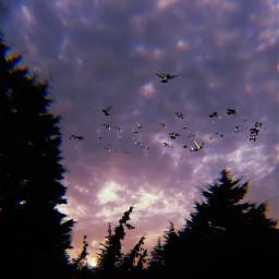 freetoedit birds sky srcflyinghigh flyinghigh