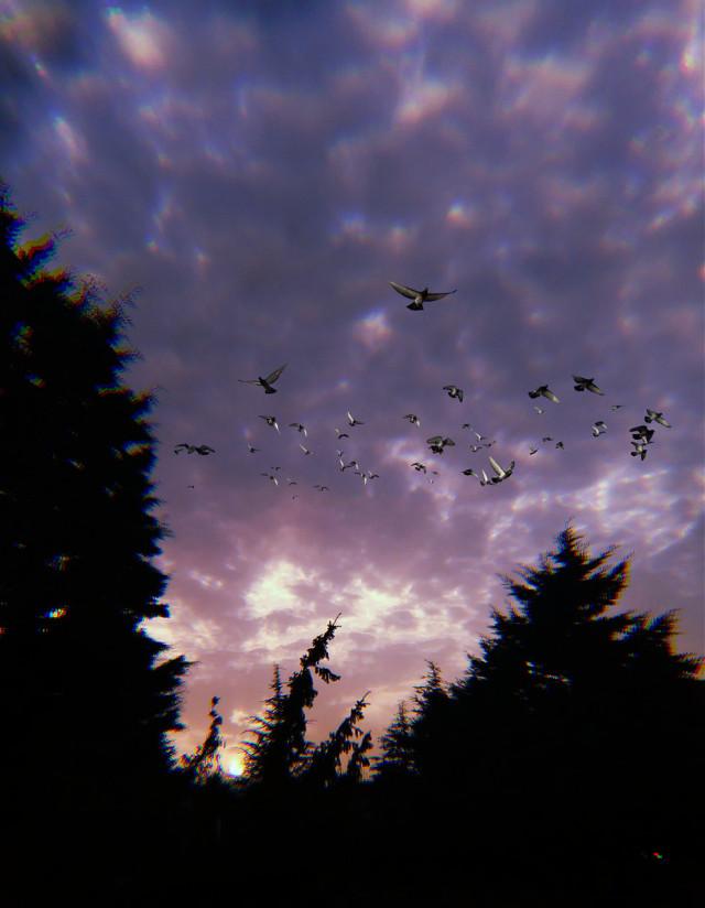 #freetoedit #birds #sky