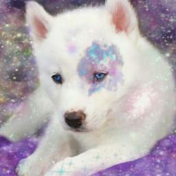 freetoedit щенок ecgalaxymakeup galaxymakeup