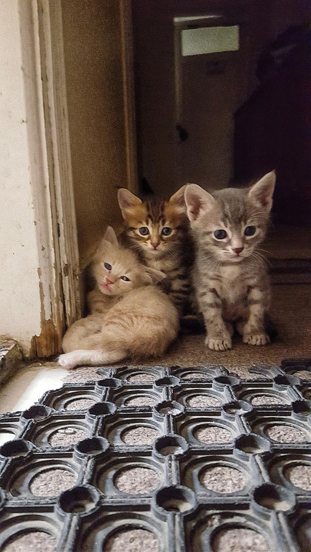 #freetoedit #kittys #beautifulcats