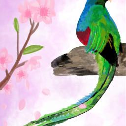 freetoedit dcspringbirds springbirds