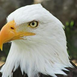 pcbird bird
