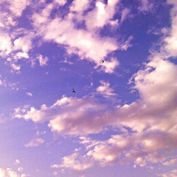 freetoedit clouds swallow