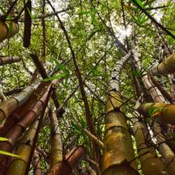 bamboo forest jungle oahu hawaii