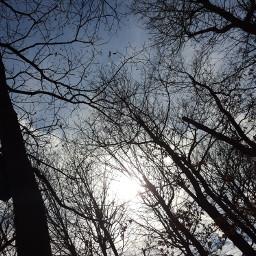 freetoedit arbres foret pcforest forest