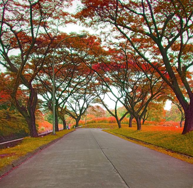 #freetoedit #myclick📷 #photography  #editedbyme #madewithpicsart #landscape #colorful #orange #red #yellow #road #nature   @pa@freetoedit