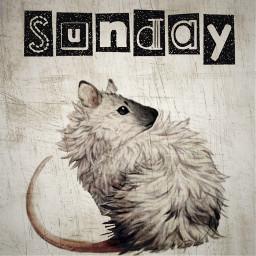 freetoedit rat sunday imbored icantsleep