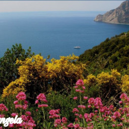 freetoedit sea landscape flovers myphoto