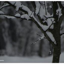 freetoedit seasonal winter treesoflife tress