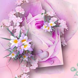 freetoedit flowers blumen rosa