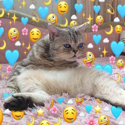 freetoedit кот кошка котик котики