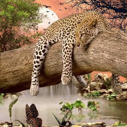 freetoedit wild wildlife leopard waterfall schmetterling