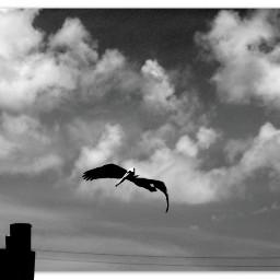 myphotography infrared bird pelican dockingpost