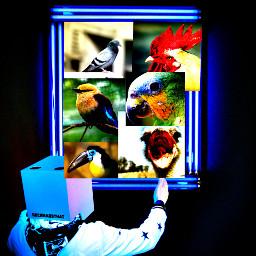 freetoedit bird birds framework animal ircremixbox