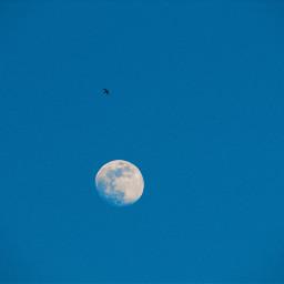 freetoedit moon bird myview fly myview