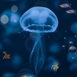 freetoedit ircjellyfish jellyfish