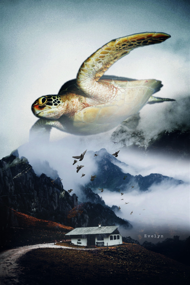 """""""Sometimes we need Fantasy to survive the reality"""" -unknown  #freetoedit #forest #mountain #foggy #fog #turtle #surreal #hills #fantasy #clouds #birdsflying #birds"""