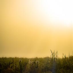 freetoedit nikond5300 photography myphoto landscape