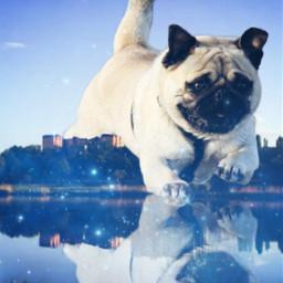 freetoedit pug galaxy city lake ircflyingpug