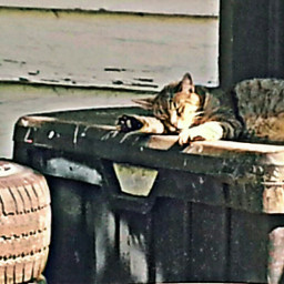 freetoedit cat sunset warmth sunshine
