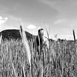 freetoedit photography nature wheatfield blackandwhitelover