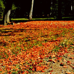 landscape fall autumn park beautifulworld