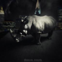 freetoedit rhinoceros nigth city
