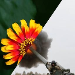война жизнь мир цветок цветы