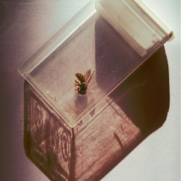 freetoedit bee