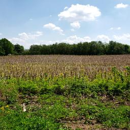 field landscape green trees grasses freetoedit pcrurallife