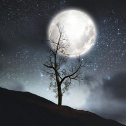 freetoedit moon tree silhouette background