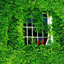 freetoedit outdoorphotography window pattern ivy