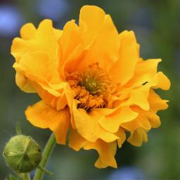 flower yellow garden nature photography