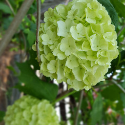 freetoedit bunia0914 myphoto flowers spring