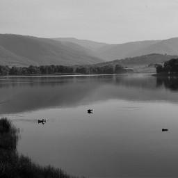 blackandwhite monokrom nature photography