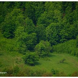 freetoedit forest forestlife landscape green