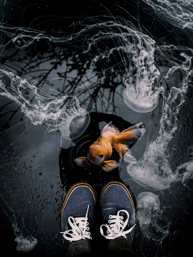 #freetoedit #fish #jellyfish #puddle #man #madewithpicsart @picsart