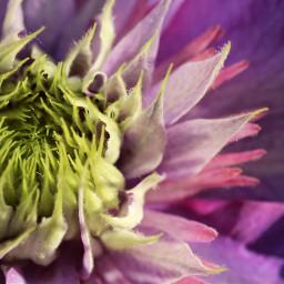 closeup flower photography garden nature